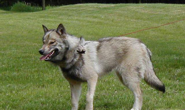 Aggressive Dog Breeds Gov