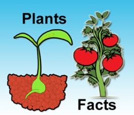 facts-about-plants